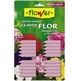 Adob clau flor Flower