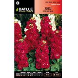 Batlle alhelí excelsior vermell