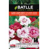 Batlle clavell xina doble flor gegant variat