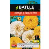 Batlle crisantem jardí bossa