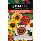 Batlle crisantem tricolor bossa