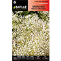 Batlle Gipsofila vivaz Paniculata.