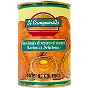 Rovelló sencer gruixut Campanillo lactarius deliciosus